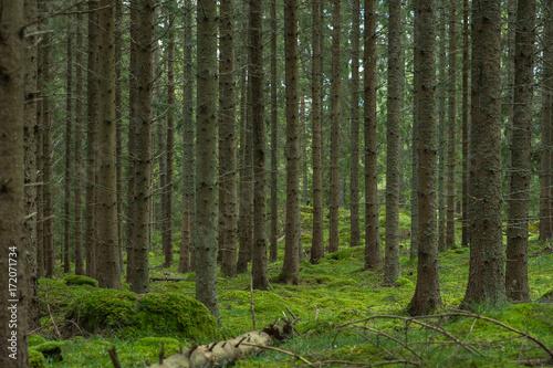 Fototapeten Wald Swedish Forest