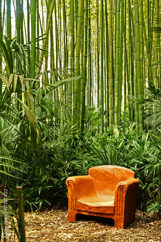 Fotografia  Armchair in the middle of the bamboos in the bamboo plantation of Anduze