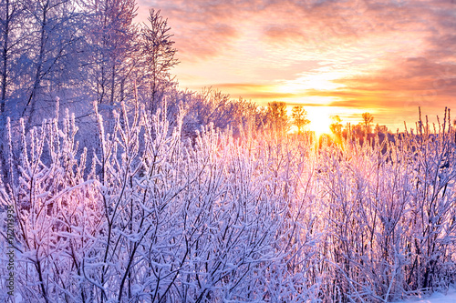 Fotomural  winter landscape with sunset and forest