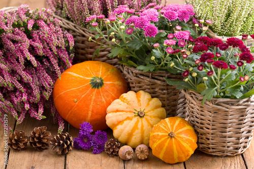 Fotografie, Obraz  Herbstblumen und Kürbisse