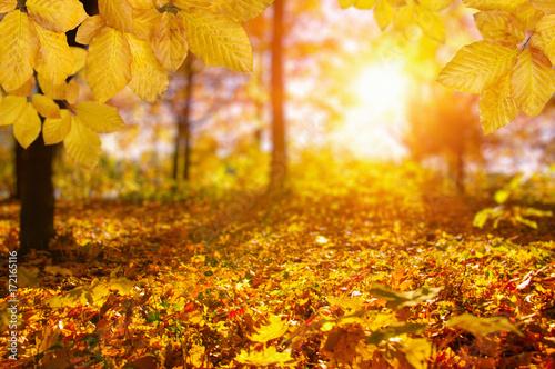 Plakat Jesienne liście na słońcu