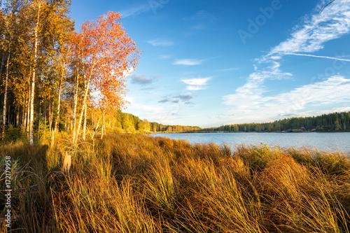 Poster Waterlelies осенний пейзаж на берегу озера с лесом и камышом, Россия, Урал