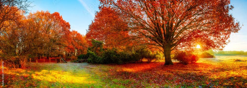 Fototapety, obrazy: Landscape in autumn with big oak tree