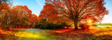 Fototapeta Natura - Landscape in autumn with big oak tree