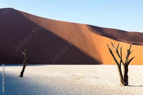 niezywy-vlei-niezywi-akacjowi-drzewa-w-namib-pustyni-przy-wschodem-slonca-namibia
