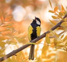 Little Chickadee Sings A Song...
