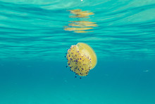 A Yellow Jellyfish Under The Waves Of Turquoise Sea La Marmorata Santa Teresa Di Gallura Province Of Olbia Sardinia Italy Europe