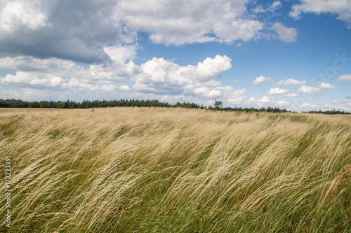 Trawa powiewa na wietrze - fototapety na wymiar
