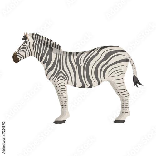 In de dag Zebra African, desert zebra. Wild cloven-hoofed animal, zebra single icon in cartoon style vector symbol stock illustration web.