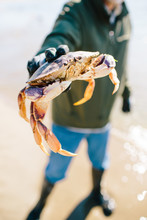 Man Holding Crab At The Beach