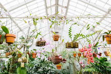 Tropical Plants In Conservatory
