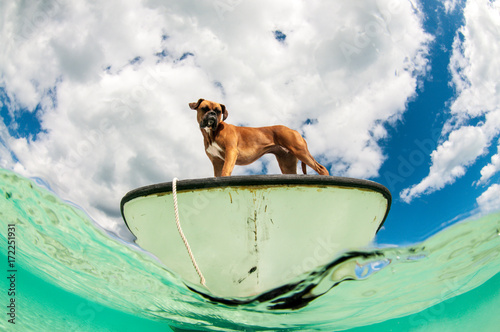 Foto op Canvas Tropical strand Boat dog