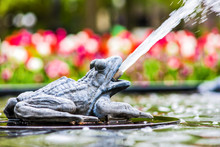 Closeup Of Floating Toad Sculp...