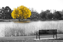 Golden Yellow Tree In Black An...