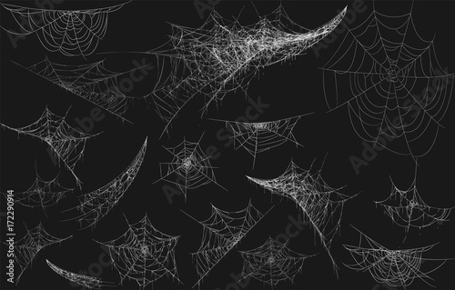 Fotografiet Halloween decor, spider cobweb, hand drawn vector illustration.