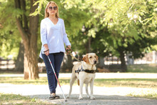 Guide Dog Helping Blind Woman ...