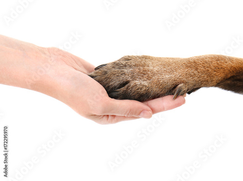 Leinwand Poster Dog paw and human hand, isolated on white