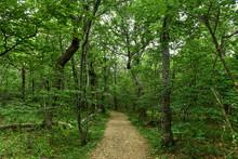 Hiking Trail - Shenandoah Valley