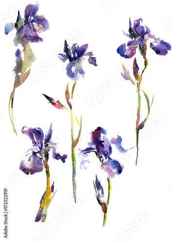 Spoed Foto op Canvas Iris Collection watercolor hand drawing summer iris flowers