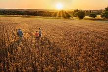 Farmer Family Standing In Their Wheat Field At Sunset