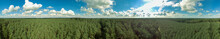 360 Degree Aerial View Panorama Of Green Pine Tree Forest In European With Blue Sky