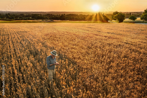 A farmer standing in his wheat field at sunset.