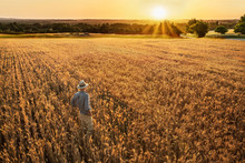A Farmer Standing In His Wheat...