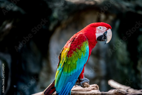 Colorful macaw on branch Canvas Print