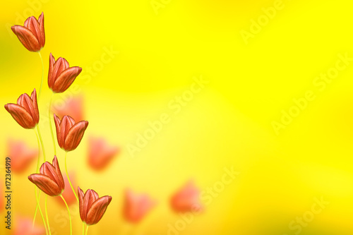 Fotobehang Zwavel geel Bright and colorful flowers tulips
