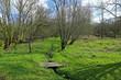 Sumpflandschaft mit Steg, Bretagne, Frankreich