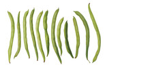 String Bean Raw Food Clipping Paths Isolate