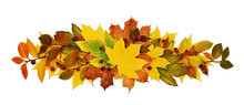 Autumn Leaves And Berries In A Line Arrangement Isolated On White Background. Flat Lay. Top View.