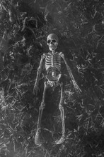 Scary Skeleton Lying In Grass