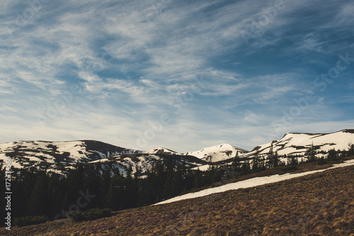 Spoed Foto op Canvas Canada Spring mountain landscape with snow and fir forest. Dramatic clouds lying on the horizon and sun is shining. Natural outdoor travel background in retro hipster style.