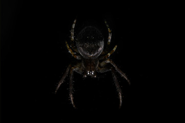 Beautiful spider on a cobweb on a black background close-up in the shade