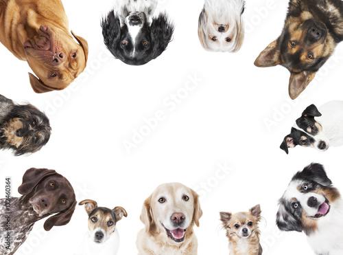 Foto  verschiedene Hundeköpfe Kreis Anordnung