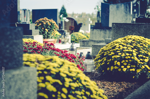 Papiers peints Con. ancienne chrysanthemum flowers in cemetery