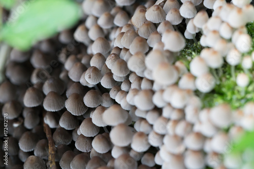 Photo  Wall of big patch of small white/grey mushrooms macro/close up shot on Amager fæ