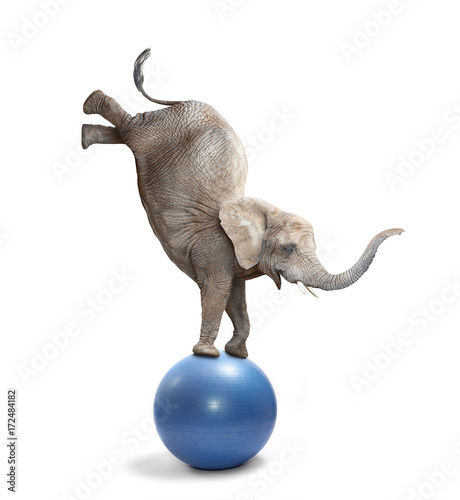 Poster Olifant African elephant elephant balancing on a ball. Funny animals isolated on white background.