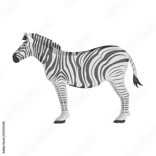In de dag Zebra African, desert zebra. Wild cloven-hoofed animal, zebra single icon in monochrome style vector symbol stock illustration web.