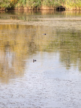 Lake Surface Scene With Two Co...