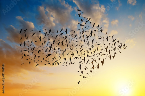 Fényképezés  Silhouette of birds flying in arrow formation at sunset sky.
