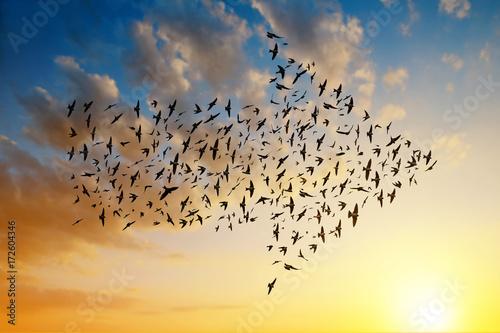 Silhouette of birds flying in arrow formation at sunset sky. Tapéta, Fotótapéta