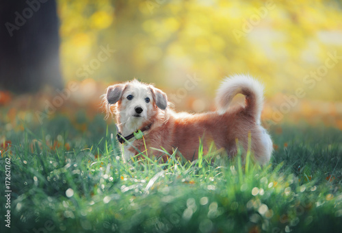 Foto  Mixed breed dog in park