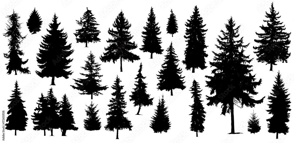 Fototapety, obrazy: Set of Twenty One different silhouettes of pine trees. Handmade.