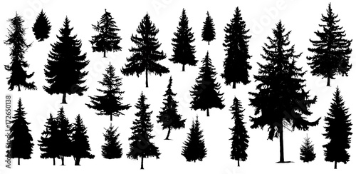Fotografia Set of Twenty One different silhouettes of pine trees. Handmade.