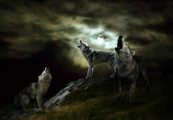 the hosts of the night are wolves