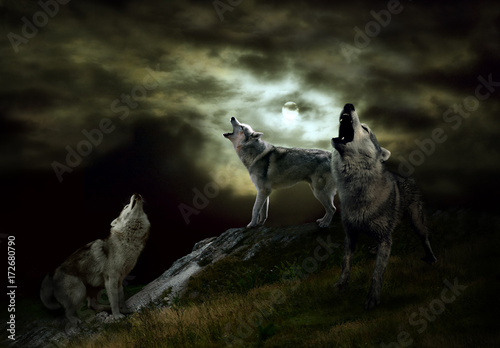 Photo sur Toile Loup the hosts of the night are wolves