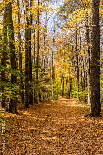 Photo  Trail through woods in Autumn