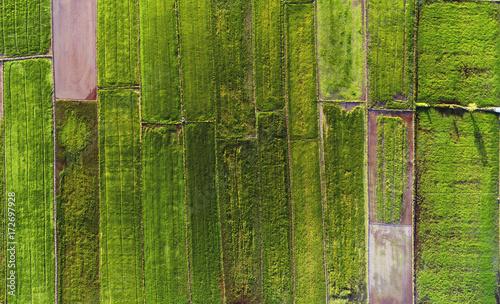 piekny-wzor-pola-ryzowego-zrobione-z-drona